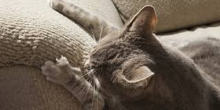 Stop your cat from scratching the furniture – HomeTimes