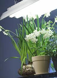 Not Enough Light For Plants Light Requirements Indoors Fluorescent Lighting For Indoor