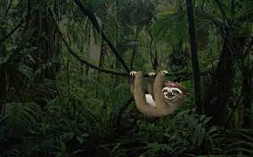 Happy Hanging Sloth Pirate