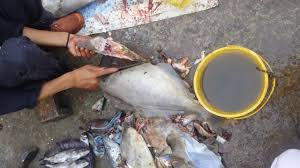 unicorn leather jacket file fish cutting irani paplet karachi fish harbour