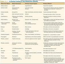 Endocrine System Glands Hormones Target Organs Effects