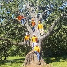 Rothco Tree Service - Woodlands, Spring, Conroe, Magnolia, Kingwood