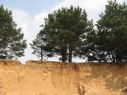 Как вырастить урожай на песчаных почвах Полезные советы и  Песчаные почвы