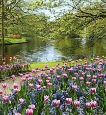 Beautiful Garden Wallpaper for Android ...