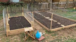build a garden and grow your own food