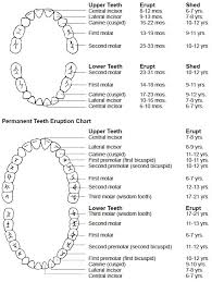 Teeth Age Chart The First Teeth Begin To Break Through The Gums At About 6