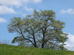 Tree Services In Charlotte  Tree U0026 Stump Removal Costs EtcFruit Trees That Grow In Nc