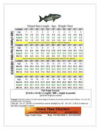 Striped Bass Age Length Weight Chart Virginiastripers