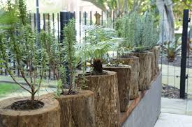office indoor plants. Indoor Plants Sydney For Events Office