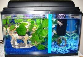 stupendous fish tank divider photo inspirations dividers careful stuff