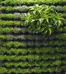 Small Picture Applicative Green Wall Garden Designs CoolBoom