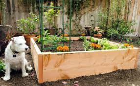 Small Picture Fresh Vegetable Garden Design Raised Beds Small Home Decoration