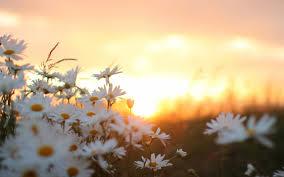 morning flowers beautiful sunrise wallpapers