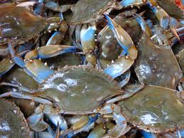 Image result for live crabs