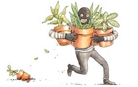 Image result for gardener stealing