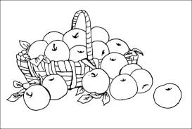 Fruit Coloring Pages Inspirational Basket Full Of Fresh Apple Fruits