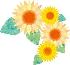 無料イラスト ひまわり花夏水彩手書きアイコンイラスト背景壁