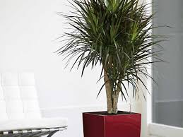 Indoor Plants Living Room Contemporary Living Room With Indoor Plants Stunning Indoor