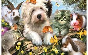 b wallpaper s b collection beautiful b dogs