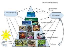 Food Pyramid Project 6p Isiah Erceg Rocky Shore Food Pyramid Project Pes