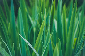 Grass Blade Pictures Download Free Images on Unsplash
