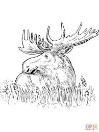 Small Picture Moose Sitting in a Grass coloring page Free Printable Coloring Pages