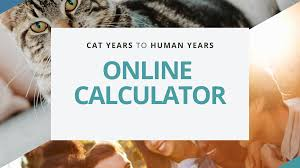 Cat Years Chart Calculator Cat Years To Human Years Instant Online Calculator