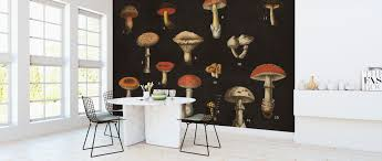 Mushroom Chart Affordable Wall Mural Photowall