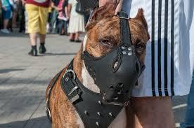 Dog Muzzle For Eating Goldenacresdogs Com