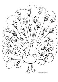 Disegno Pavone Per Bambini