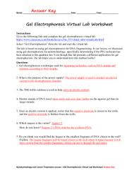 Dna Fingerprinting Lab Answers Worksheets Gel Electrophoresis Worksheet Opossumsoft Worksheets