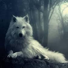 Snowdog (snowdog523) on Pinterest