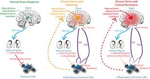 Hpa Axis Role Of Stress Induced Activation Of Hpa Axis Cortisol And