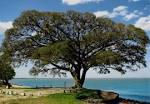 imagem de São Lourenço do Sul Rio Grande do Sul n-11
