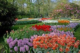 color garden. Landscapes Garden Park Color Trees Blossom Wallpaper | 2590x1720 32168 WallpaperUP