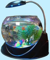 Small Fish Bowl Decorations fighter tank Aquarium Addicts Anonymous Page 60 36