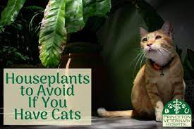 9 houseplants that can be poisonous to cats