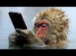 Смешные обезьяны Приколы про обезьян Funny monkeys #2 (Обезьяны едят арбуз,  курят и плюются) смотреть онлайн в хорошем качестве