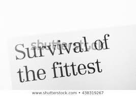 Divorce Essays Essays On Divorce Survival