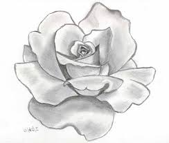 Small Picture Drawn rose awesome Pencil and in color drawn rose awesome