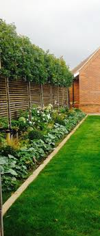 Lime trees under planted with fresh green and white planting