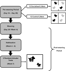 Pig Feeding Chart By Age Pdf Socialisation And Its Effect On Play Behaviour And