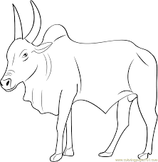 Small Picture Kangayam Bull Coloring Page Free Bull Coloring Pages
