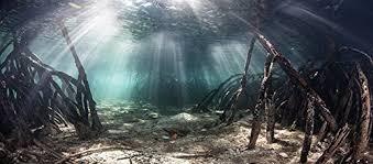Aquarium Backgrounds The Best Aquarium Backgrounds For Fun Fish Tanks Mostcraft