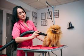 best dog grooming table reviews