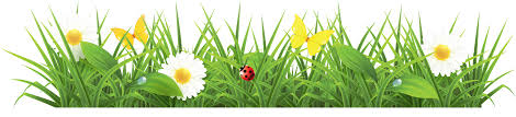 grass png. Wonderful Grass Grass Png Image Green Picture And Grass Png A