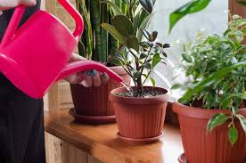 watering can house plants