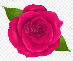 free png pink rose png images