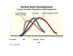 Brain Fact Experiences Provided In Early Life Directly