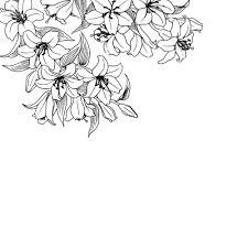 tumblr transparents black and white flowers. classy black and white clipart tumblr transparent background transparents flowers b
